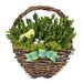 Easter Chick Wall Basket