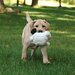 Puppy Tough Balls Sheep Dog Toy