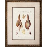 Rostellaire / Pyrule Wall Art (Set of 2)