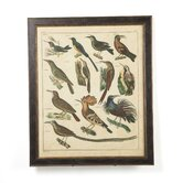Aviary 3 on Canvas Framed Print