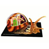 4D-Vision Snail Anatomy Model
