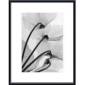 Cyclamen Study #4 by Steven Meyers  Metal Framed Art Print