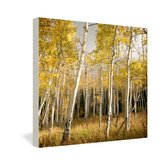 Bird Wanna Whistle Aspen Gallery Wrapped Canvas