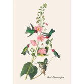 Anna's Hummingbird Canvas Art