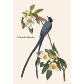 Fork-Tailed Flycatcher Canvas Art