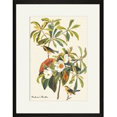 Bachman's Warbler Framed and Matted Print