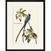 Fork-Tailed Flycatcher Framed and Matted Print