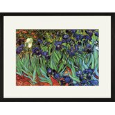 Irises Framed and Matted Print