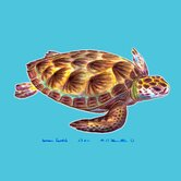 Sea Turtle Coaster (Set of 4)