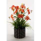 Gloriosa Lilies with Wild Grass in Ceramic Planter