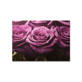 Plum Roses Row Printed Canvas Art - 30&quot; X 40&quot;