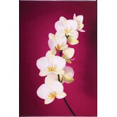 Fucshia Orchid Lacquer Art