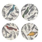 Ornithology Dinner Plate (Set of 4)