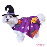 Pumpkin Witch Dog Costume