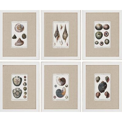 "Paragon Sea Shells by Diderot Waterfront Art (Set of 6) - 15"" x 19"""