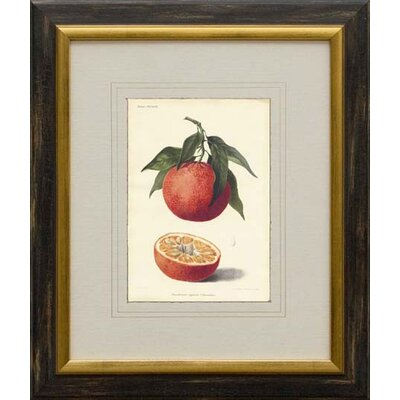 Phoenix Galleries Orange Framed Print