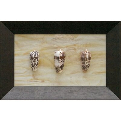 Phoenix Galleries Three Conus Striatus Shadow Box