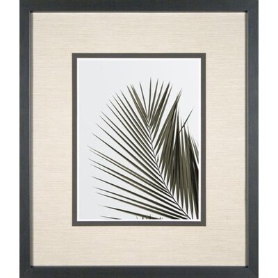 Phoenix Galleries Palm Leaf Framed Prints