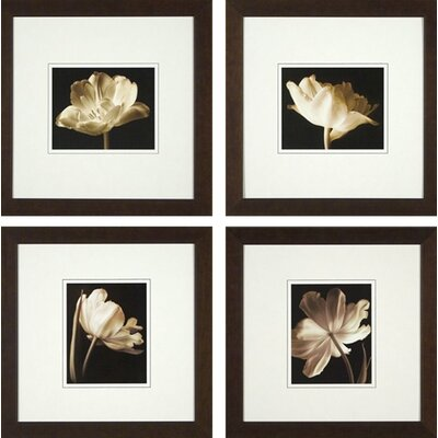 Phoenix Galleries Champagne Tulip Framed Prints