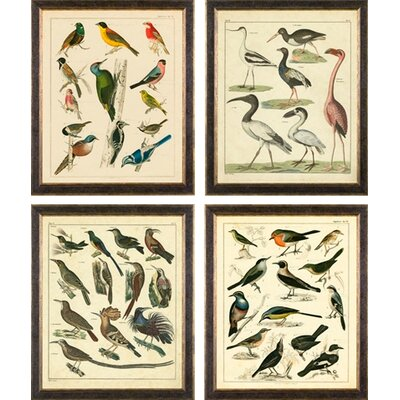 Phoenix Galleries Aviary on Canvas Framed Prints