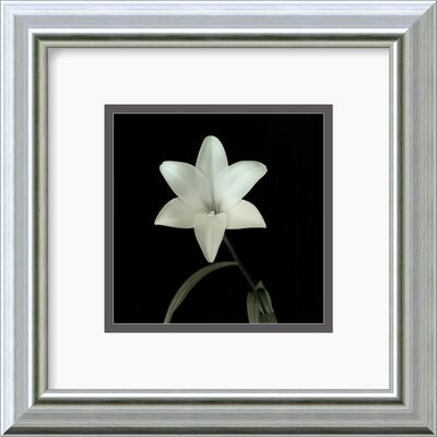 "Amanti Art Flower Series VI by Walter Gritsik Framed Fine Art Print - 11.99"" x 11.99"""