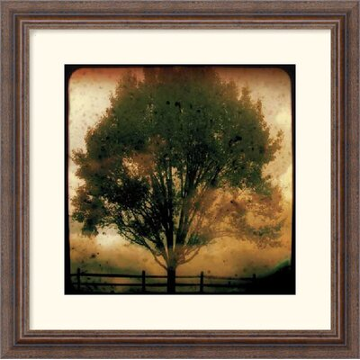 Old Gold by Linda Plaisted Framed Art Print - 18.30