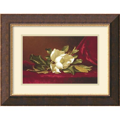 Amanti Art The Magnolia Flower Framed Print by Min Johnson Heade