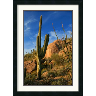 Amanti Art Sublime Sonoran Framed Print by Andy Magee