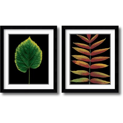 Amanti Art European Linden and Staghorn Sumac Framed Print by Christopher Griffith (Set of 2)