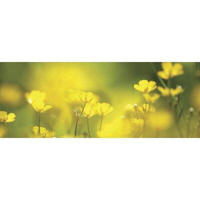 Ultimate Spring Morning Panoramic Wall Mural
