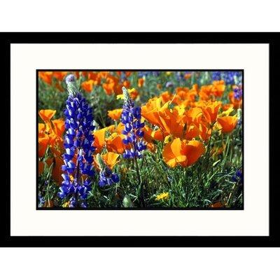 Great American Picture Poppies Tehachapi Framed Photograph