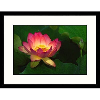 Great American Picture Lotus Flower Framed Photograph