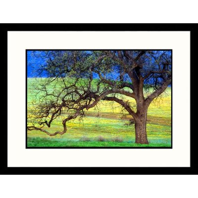 Great American Picture Oak Tree California Framed Photograph