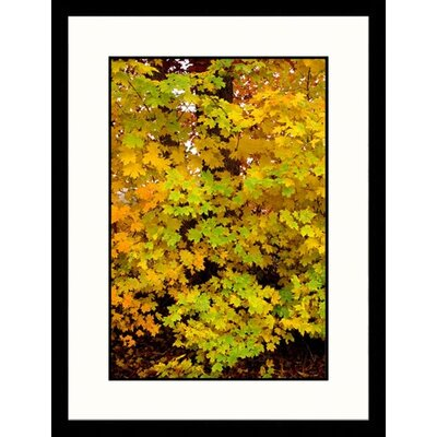 Great American Picture Fall Leaves, Tennessee Framed Photograph - Jack Jr Hoehn