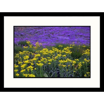 Great American Picture Wildflowers Lassen Volcanic National Park Framed Photograph - Brian Maslyar