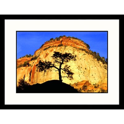 Great American Picture Tree Silhouette at Sunrise Framed Photograph - Russell Burden