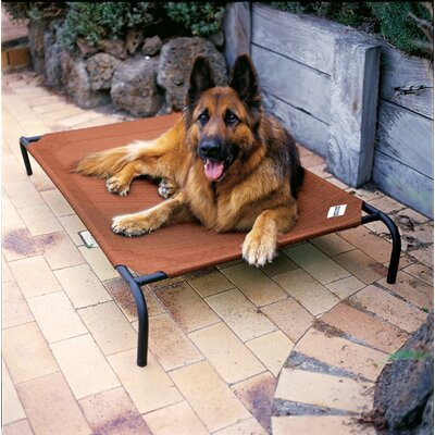 Coolaroo Elevated Indoor/Outdoor Pet Cot for Large Breeds