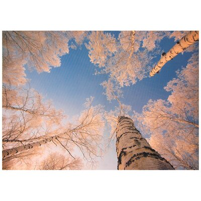 Treetops in Daylight Canvas Wall Art - 19.75