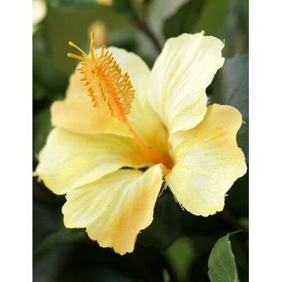 "Flora Novara 42"" Artificial Hibiscus Plant with Yellow Flowers"