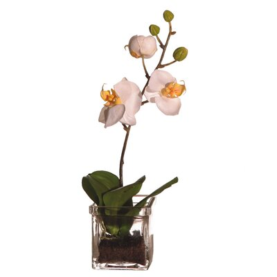 Vickerman Co. Floral Orchid in Square Vase