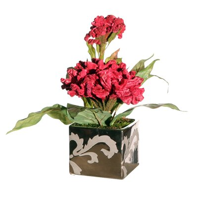Vickerman Co. Floral Cockscomb in Square Pot