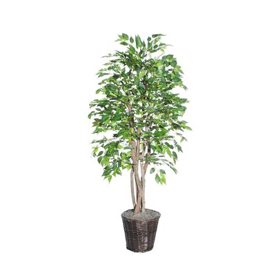 Vickerman Co. Blue Ridge Fir Executive American Elm Tree