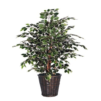 Vickerman Co. Blue Variegated Tree