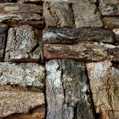 "EliteTile 16 - 1/2"" x 16 - 1/2"" Unpolished Tree Bark Mosaic in Natural Mahogany"