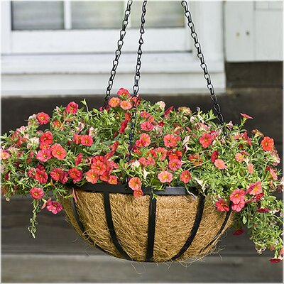 CobraCo English Round Hanging Basket