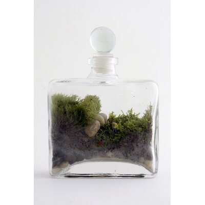 Twig Terrariums Tropisma Male DIY Kit