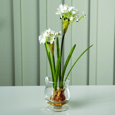 Sage & Co. Fleur Paperwhites with Bulbs in Glass