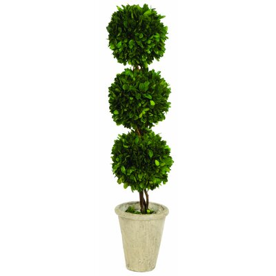Sage & Co. Triple Ball Topiary