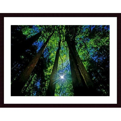 Forest Canopy Wood Framed Art Print