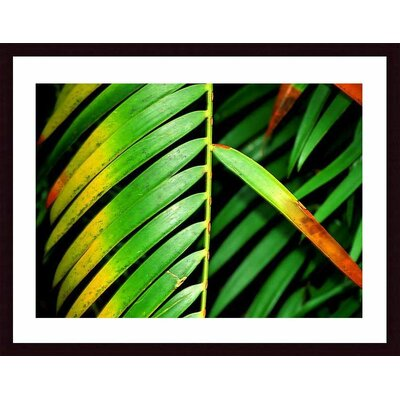 Barewalls Colorful Palm Leaf Wood Framed Art Print